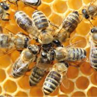 В рамках Всероссийской инклюзивной акции «Музей для всех!» прошло культурно-образовательное мероприятие «Эти удивительные пчелы»