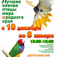 Дюртюлинский историко-краеведческий музей приглашает на выставку лучших певчих птиц мира