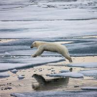 27 февраля – международный день Полярного медведя.