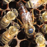 Сотрудники Национального музея Республики Башкортостан провели культурно-образовательное мероприятие «В гостях у пчелы» для детей младшего школьного возраста в онлайн режиме