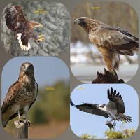 Редкие птицы Башкортостана. Хищные птицы.