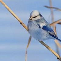 Экологический праздник 12 ноября – Синичкин день